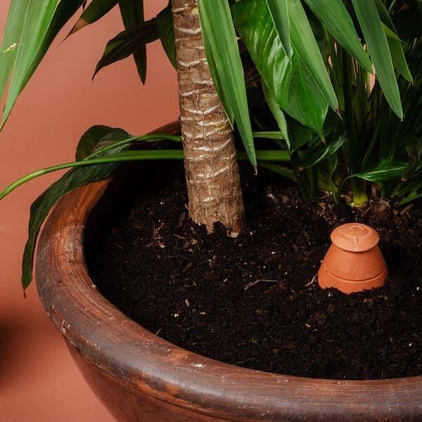 Un olla taille M de Wepot planté dans un grand pot de terre avec un yucca derrière.
