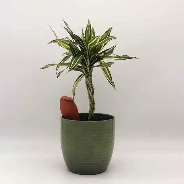 Un olla XS de Wepot, dépassant d'un pot dans lequel il irrigue une plante.