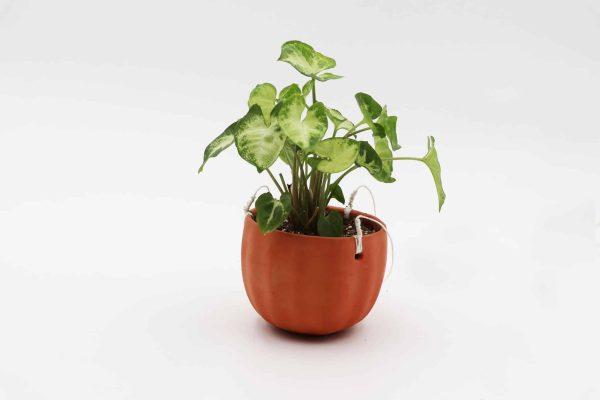 Un pot en terre cuite suspendu, avec une plante verte à l'intérieur