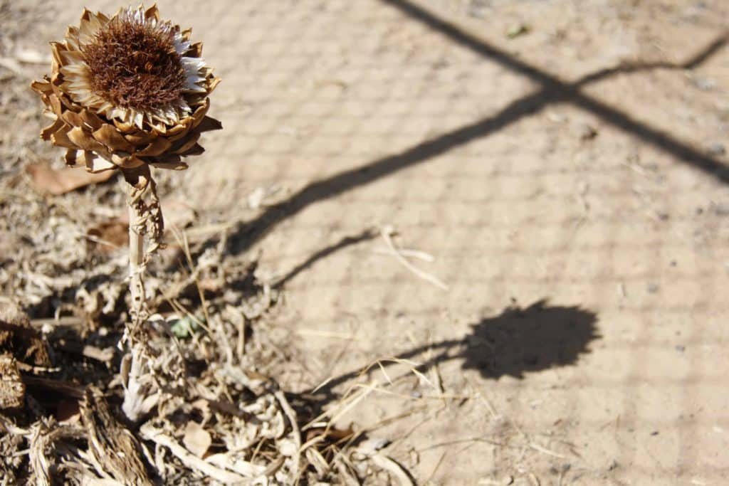 arroser ses plantes en vacances