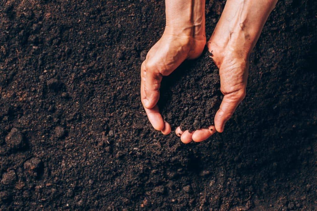 comment garder l'humidité au pied de ses plantes
