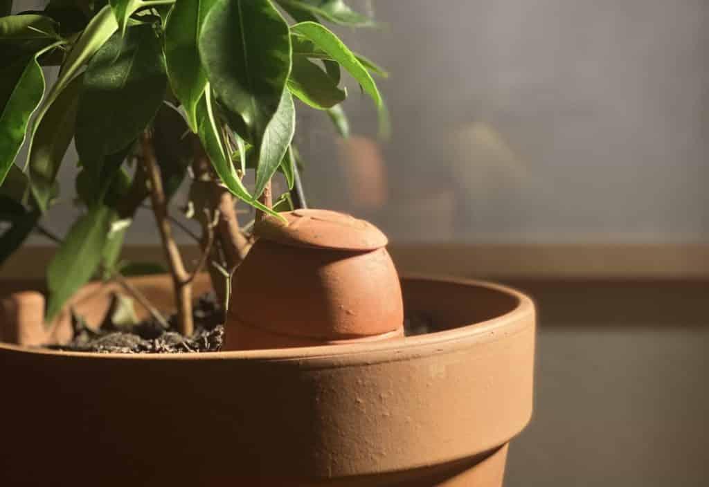utiliser des Ollas pour prendre soin de ses plantes pendant les vacances