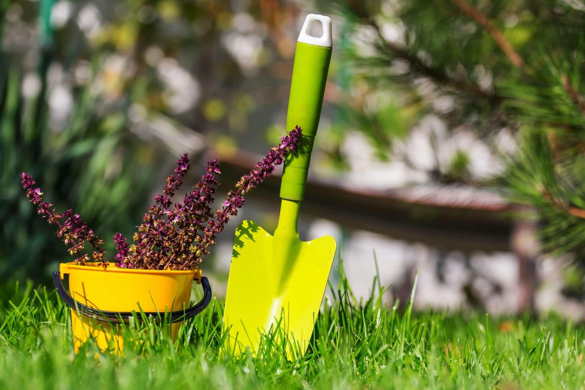 transplantoir planté dans le sol, accessoire de jardin
