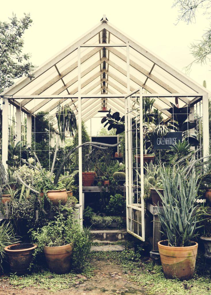 serre remplie de plantes vertes