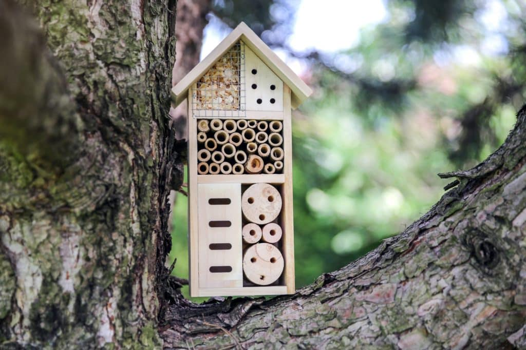 une maison à insectes posée sur un arbre