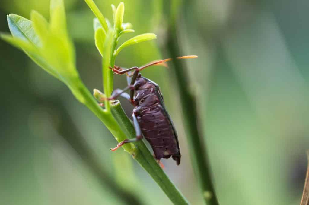 Comment faire venir les insectes ?