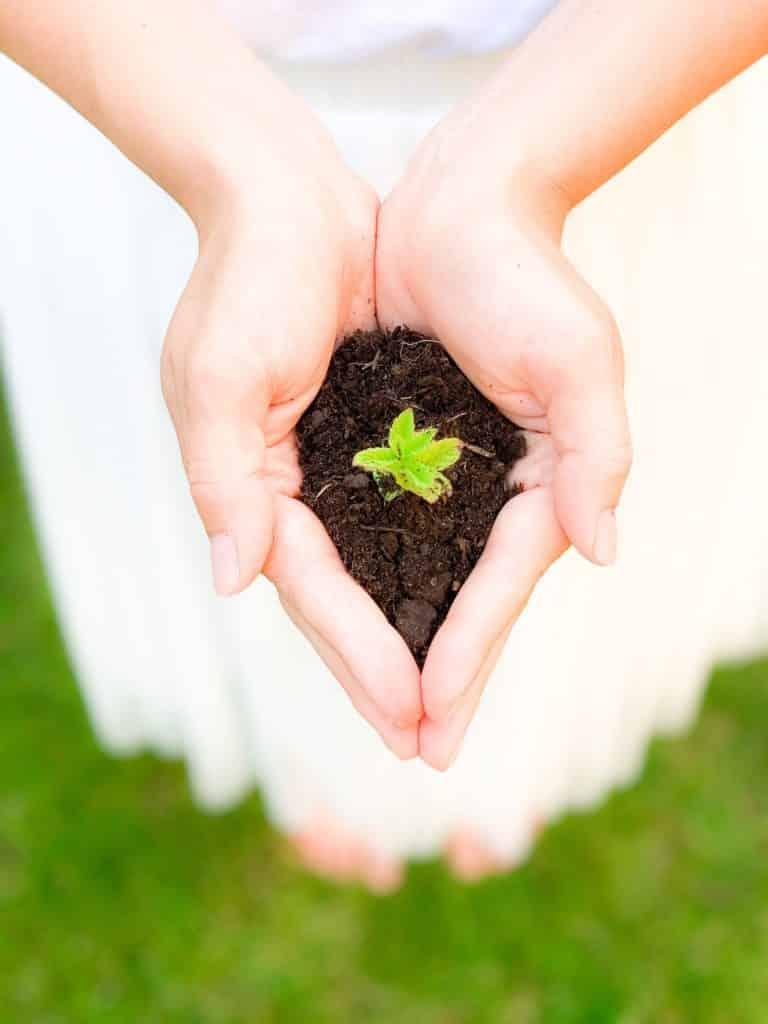 permaculture écologique