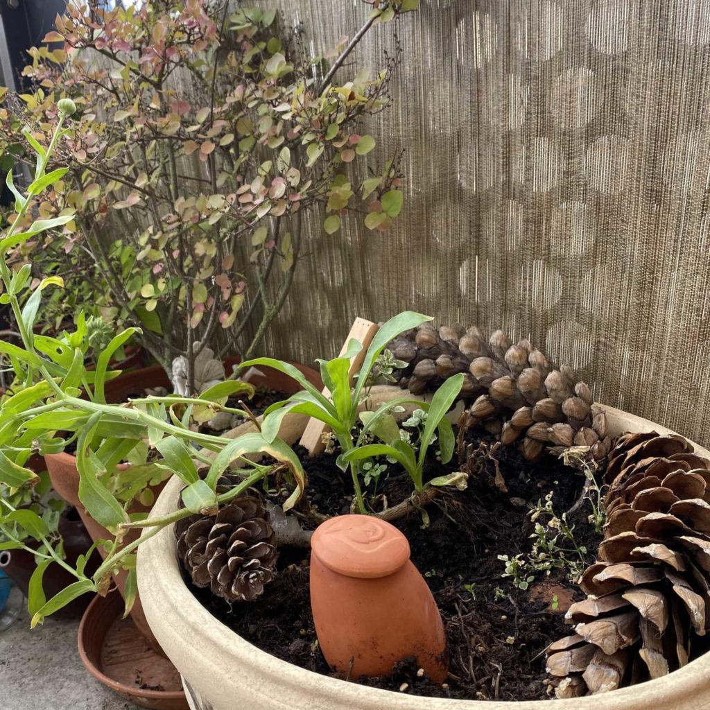 une oya plantée dans un pot de fleur avec des pommes de pin