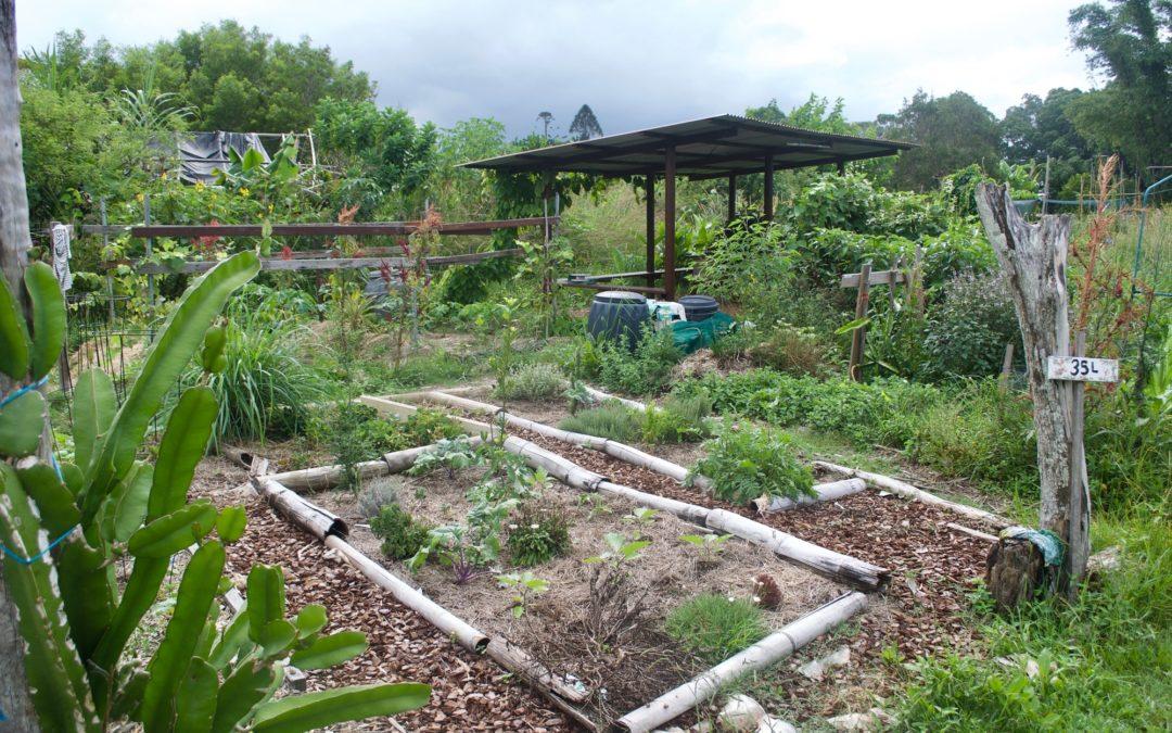 Comment faire de la permaculture dans mon jardin ?