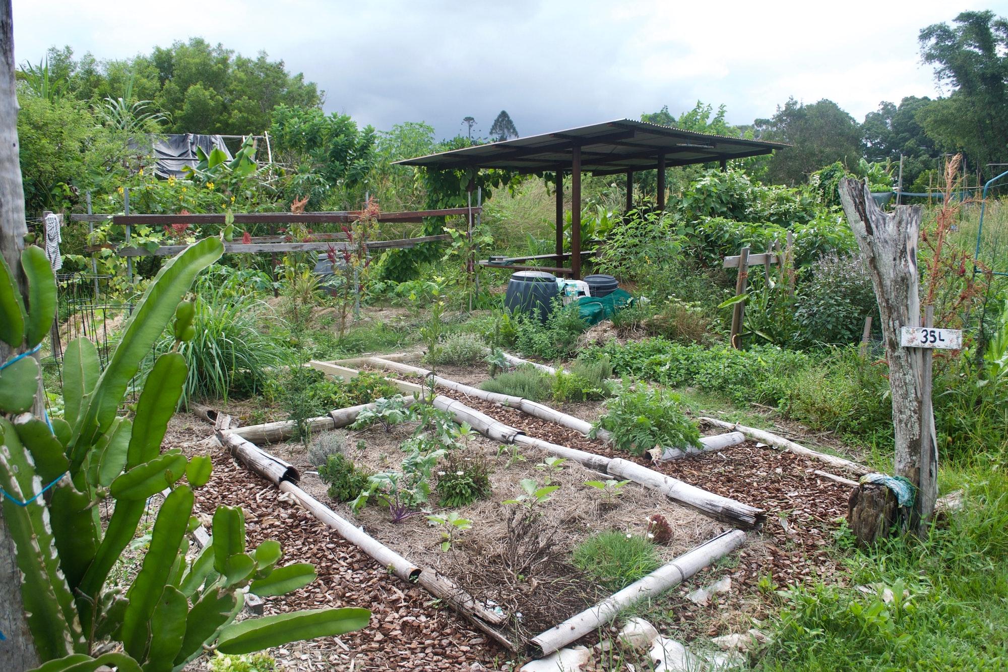 comment faire de la permaculture dans mon jardin