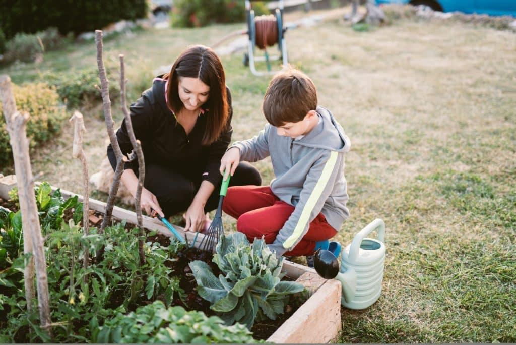 permaculture associations de plantes