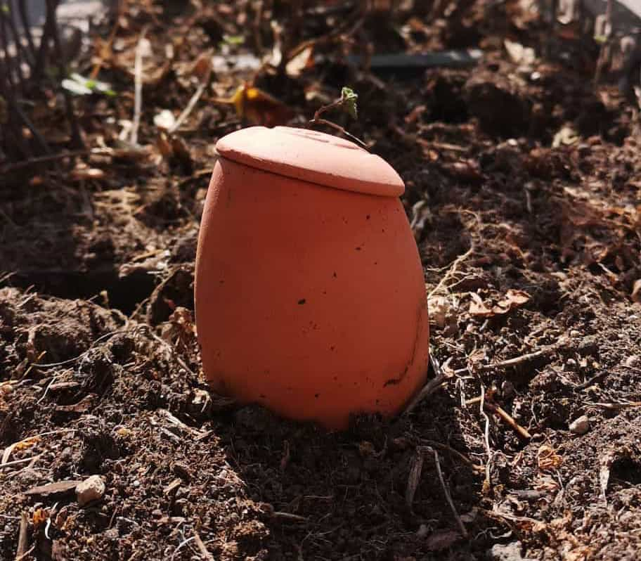 oya plantée dans la terre