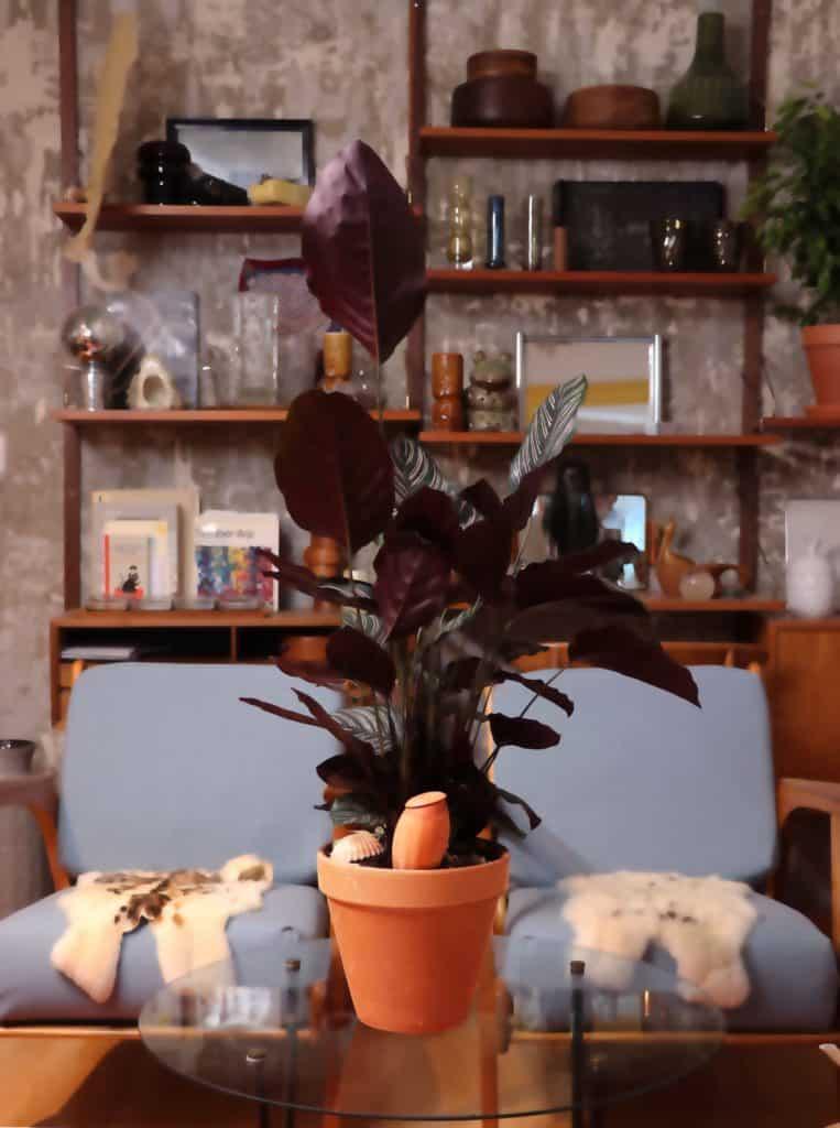 une plante dans un salon avec un oyas dans le pot