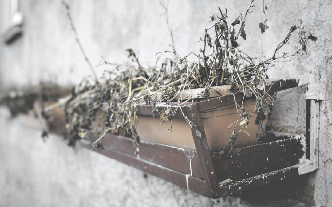 Comment sauver une plante sèche ? 5 astuces !