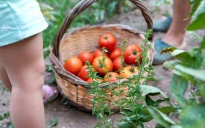 Arroser ses légumes avec des oyas : LA méthode écologique !