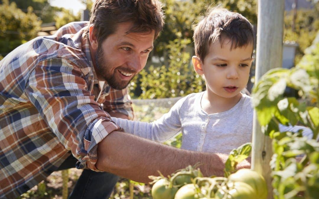 Comment prendre soin de ses tomates avec des oyas ?