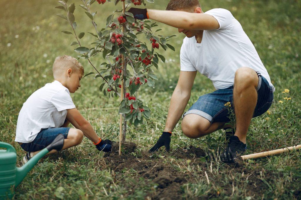 homme plante un arbuste avec son fils