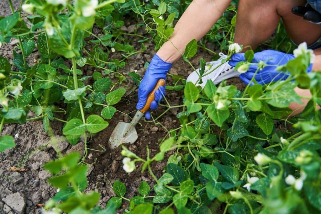 femme creuse un trou avec une truelle pour installer un pot en terre pour son arrosage