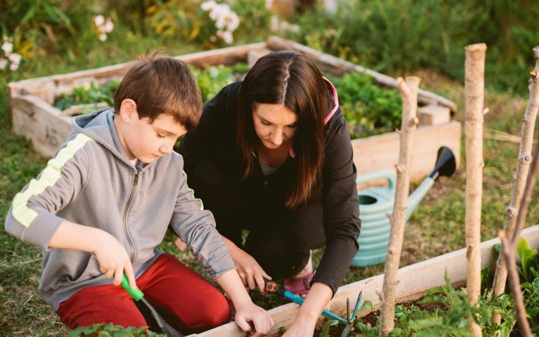 Comment planter des oyas dans un potager ?