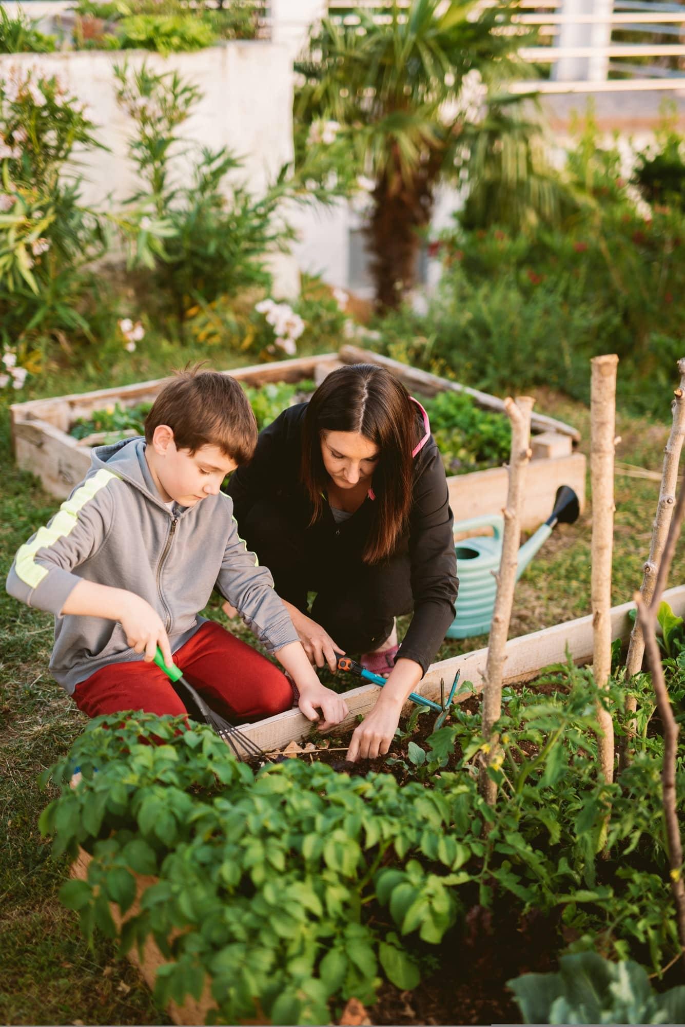 mère et fils en train de planter des oyas dans un potager