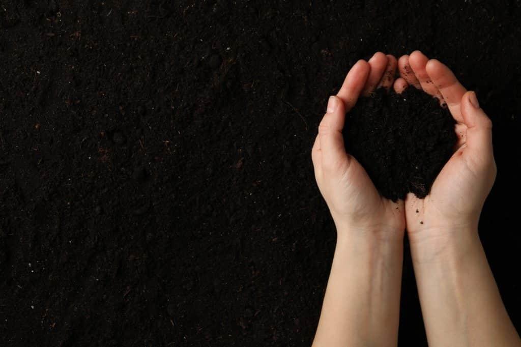 mains de femme tiens une poignée de terre humide bien irriguée