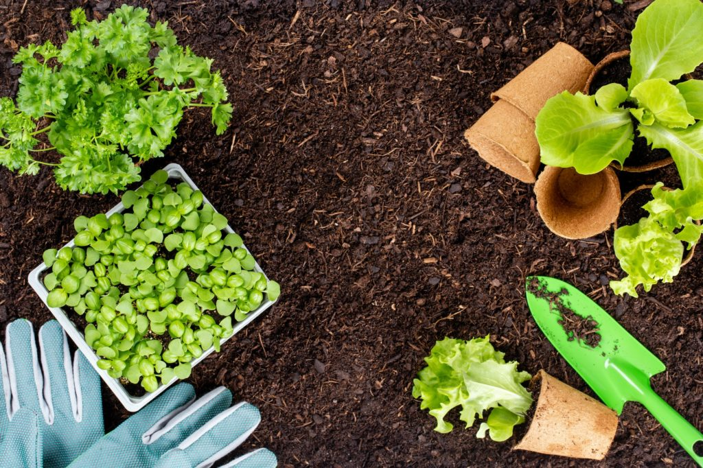 terre truelle et salade
