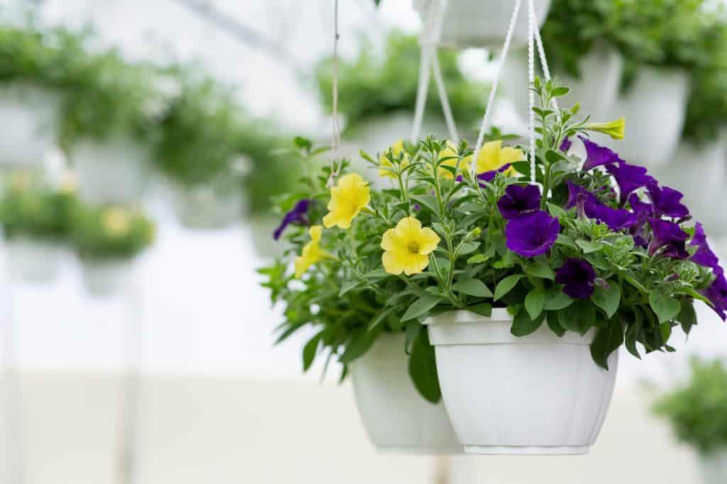fleurs dans un pot suspendu