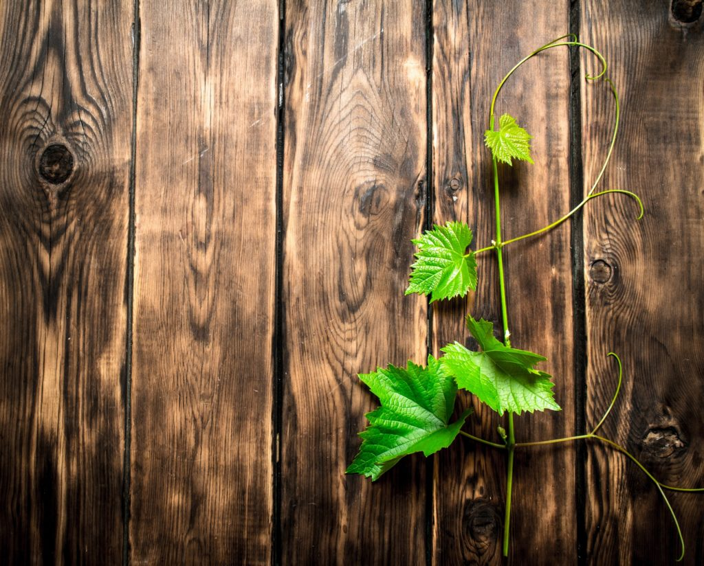 plante grimpante sur du bois