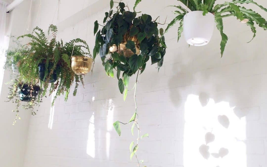 Suspension florale en intérieur : Tous NOS conseils !