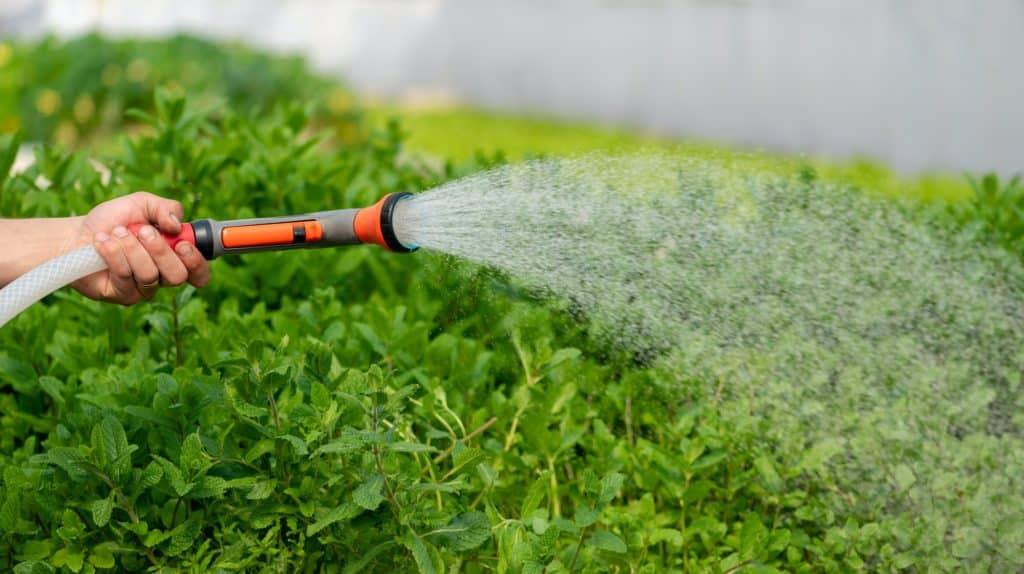 arrosage des plantes avec de l'eau potable