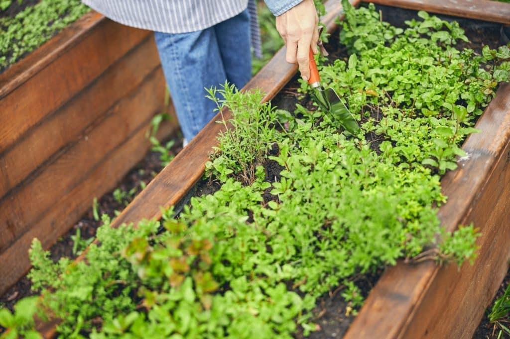 femme creuse un trou dans sa jardinière pour y planter une oyas