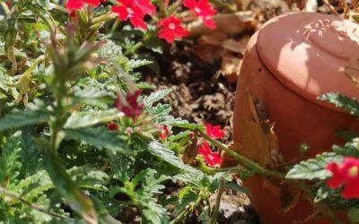 Oyas pour jardinières : Pourquoi et comment les utiliser ?