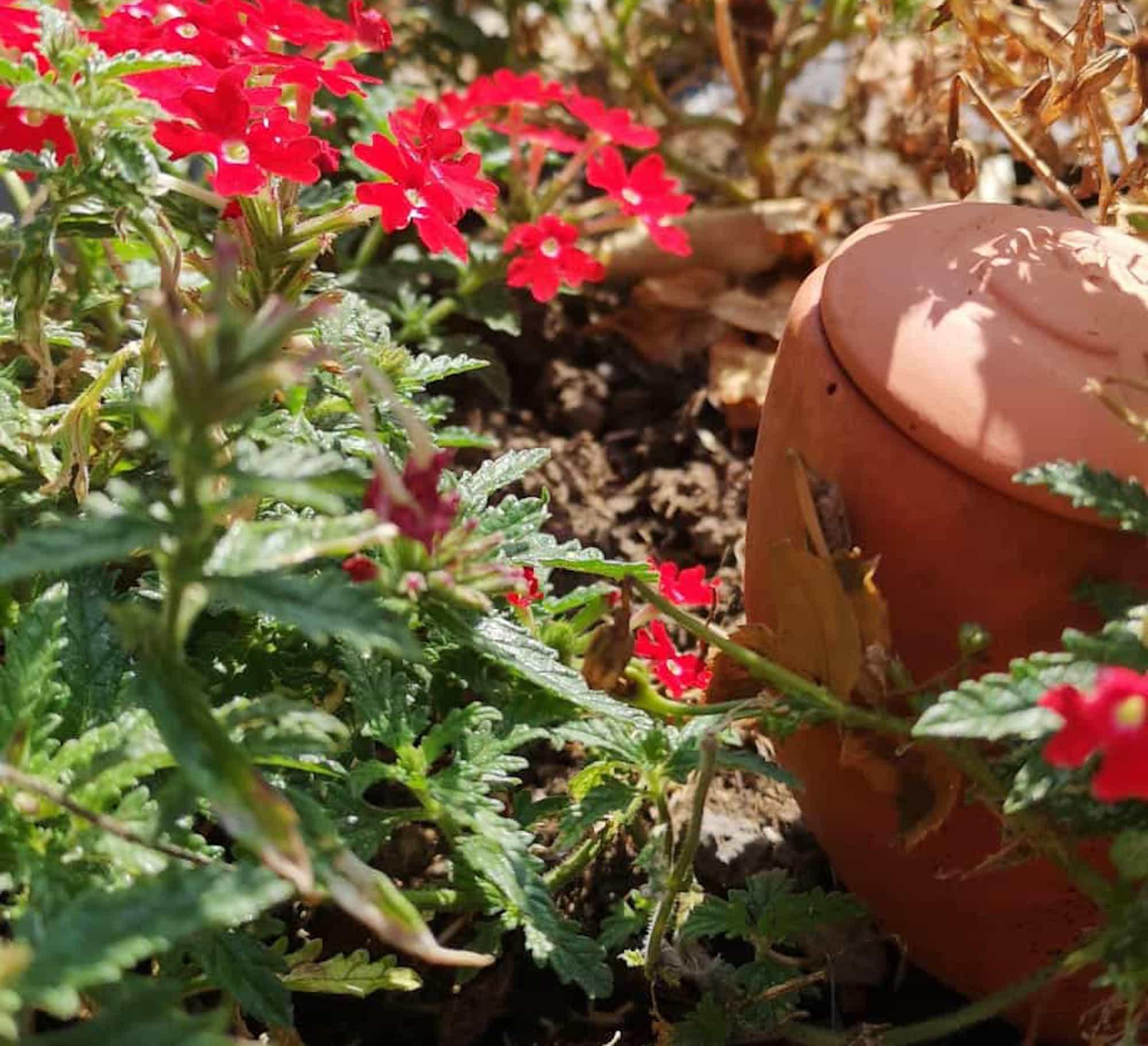 Oyas et fleurs dans une jardinière